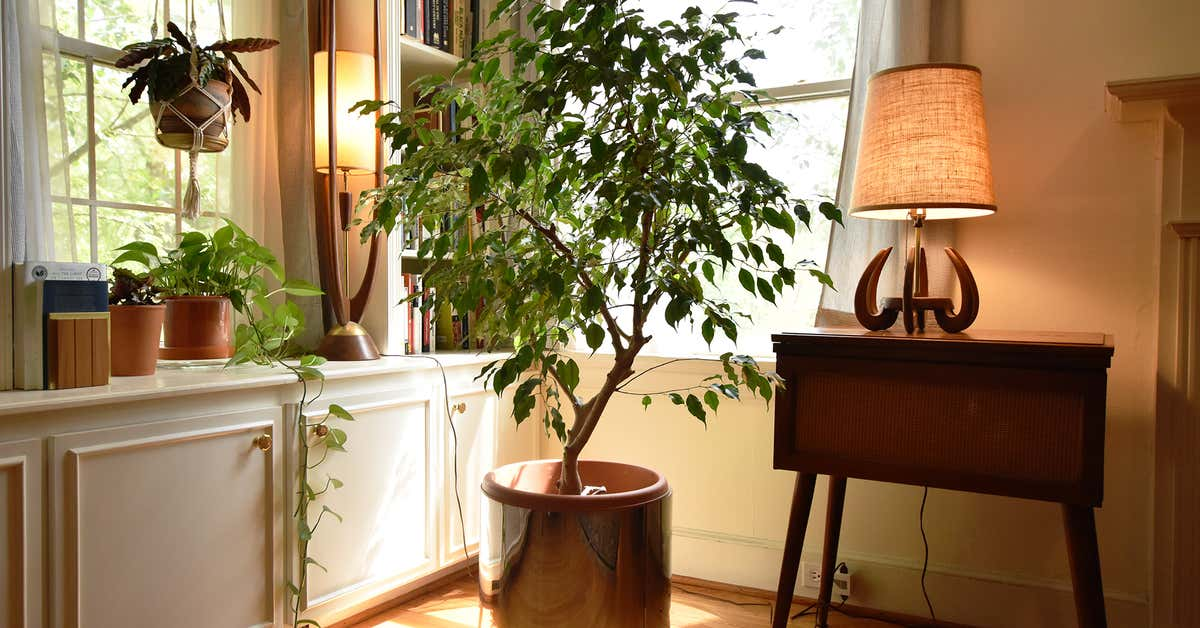 our-favorite-plants-(and-how-we-keep-them-alive)